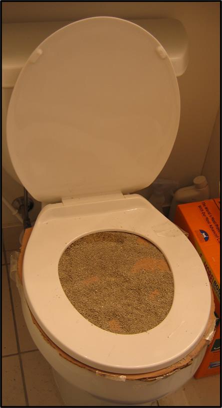 toilettes pour chats