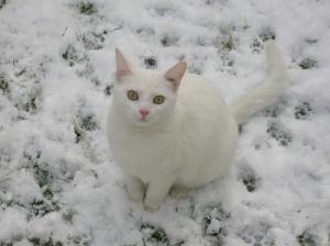 blanc-sur-blanc