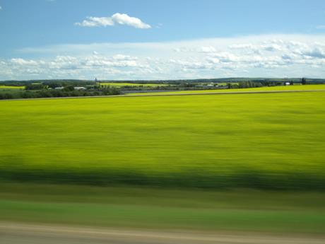 Entre les champs de forage et les champs de moutarde, on est gâtés!