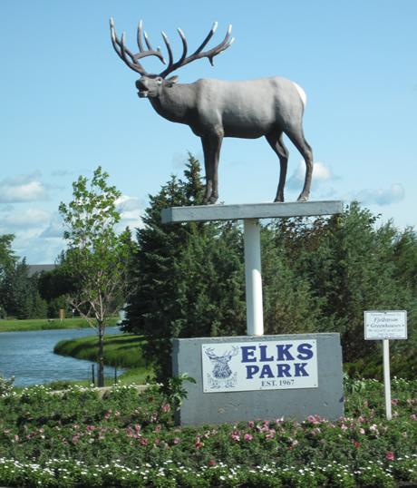 c'est quoi la différence entre un elk et un moose et un deer et un reindeer?