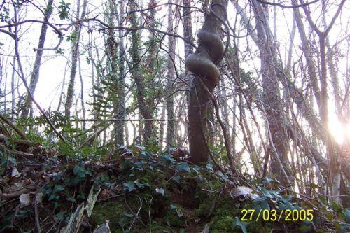 tronc disgrâcieux mais original, forêt bretonne