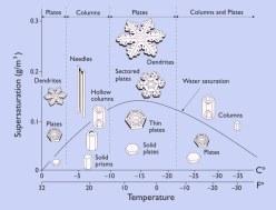 morphologydiagram