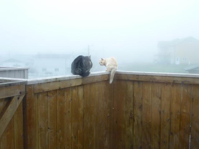 2011 06 04 Brouillard - 02