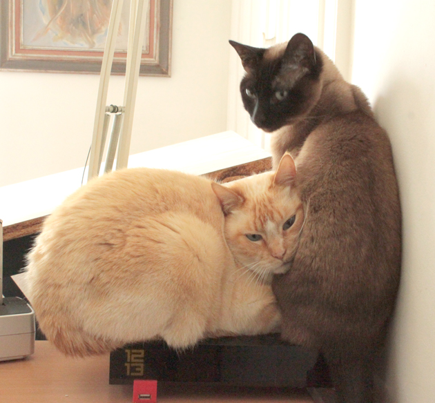 cats-on-the-Freebox