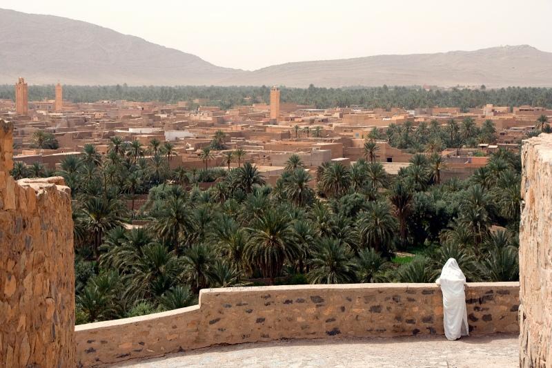 *ombe blanche à Figuig (Maroc)