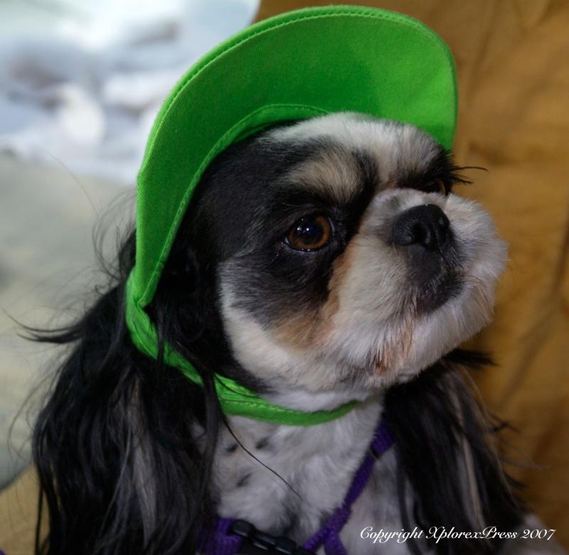 Sammy la casquette