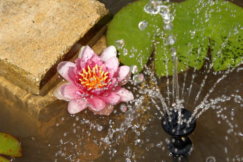 bassine au jet d'eau