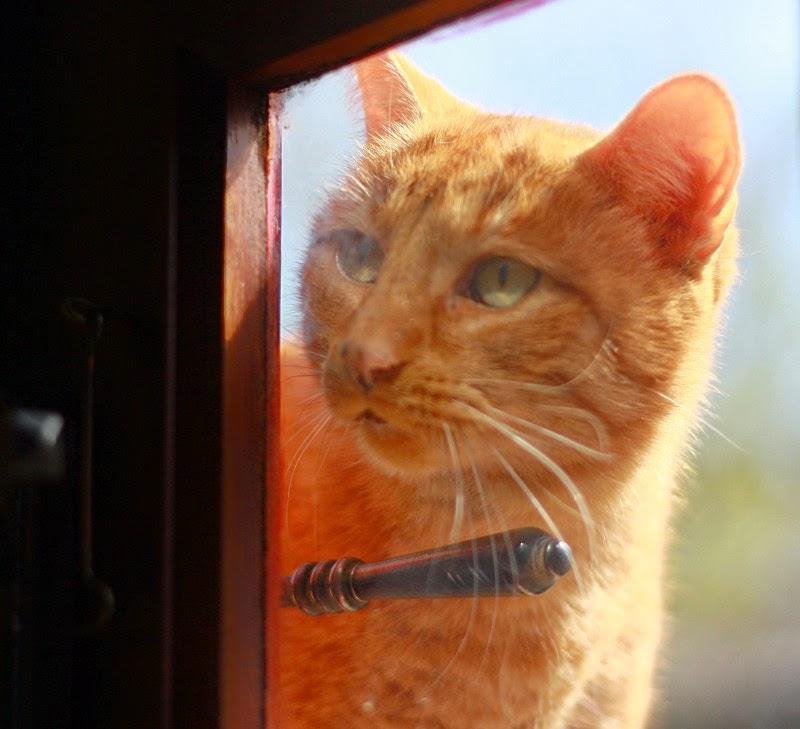 léon derrière la porte