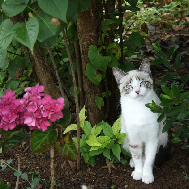 crapotte, chaton abandonnée par sa mère dans notre jardin au printemps