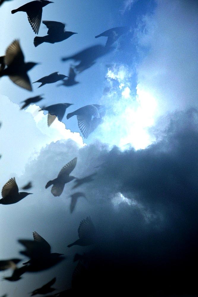 ciel aux étourneaux