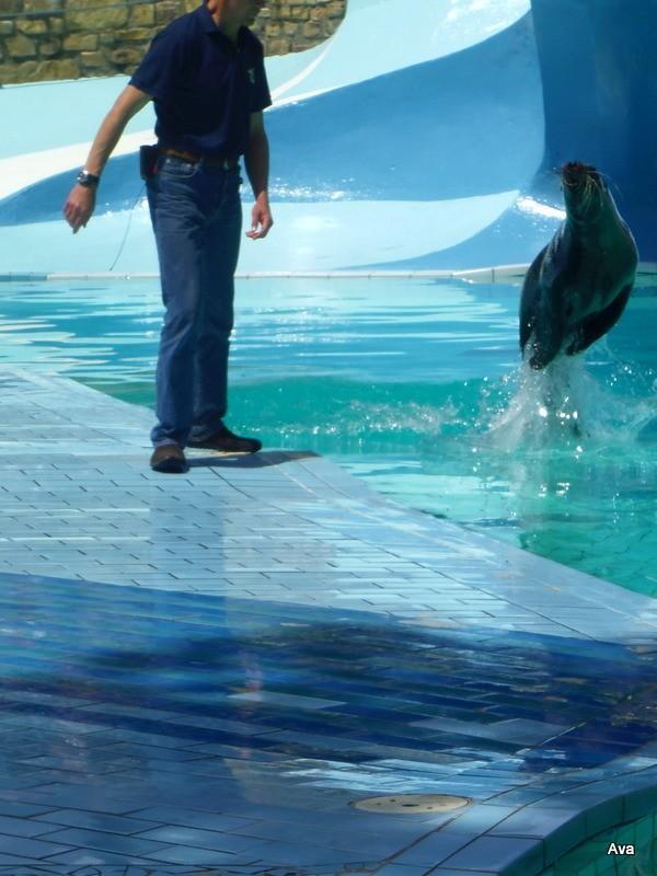 animation des phoques - zoo de la Palmyre - Charente maritime