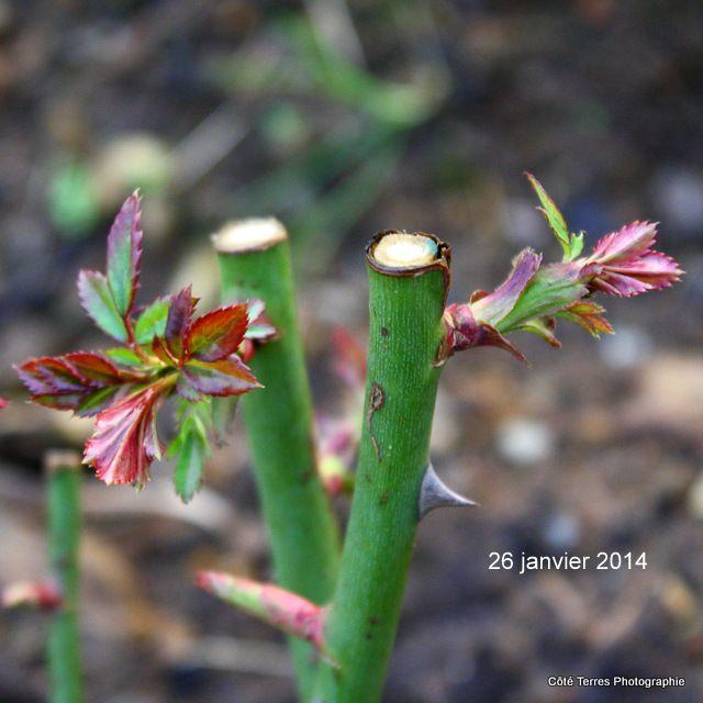 bientôt le printemps